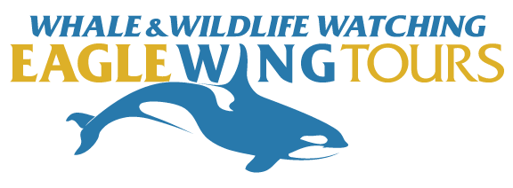logo file for Eagle Wing Whale and Wildlife Watching Tours